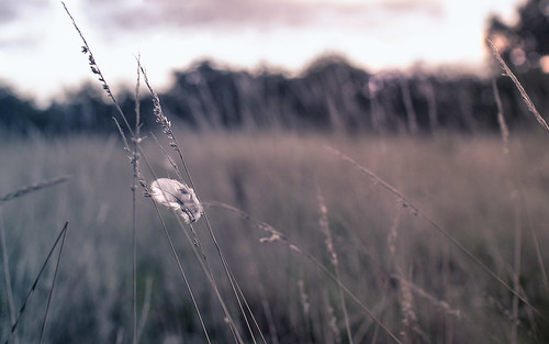 Caught in the grass // 08 08 13 by Manadh