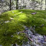 06 Viajefilos en Australia. Cathedral Rock NP 09