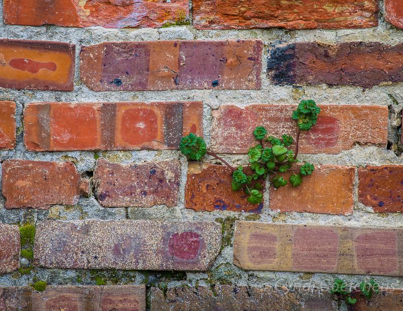 brick wabi sabi