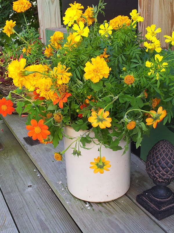 marigolds in crock