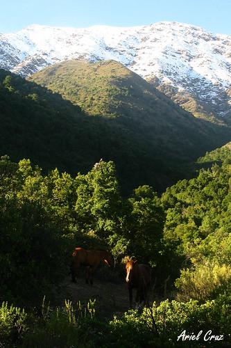 Reserva Nacional Río Clarillo
