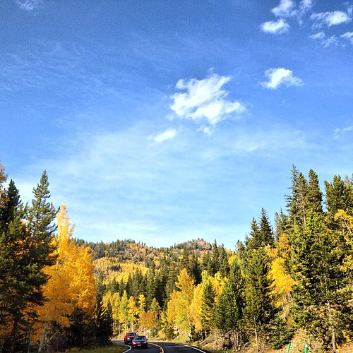Golden Aspens by @MySoDotCom