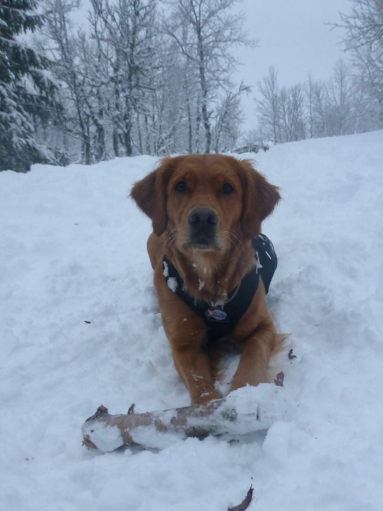Scala i snøen