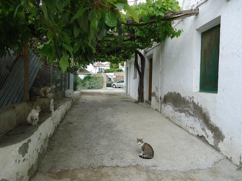 Calle y gatitos alpujarreños