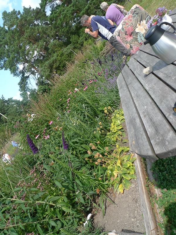Vånsjö fjärilsträdgård
