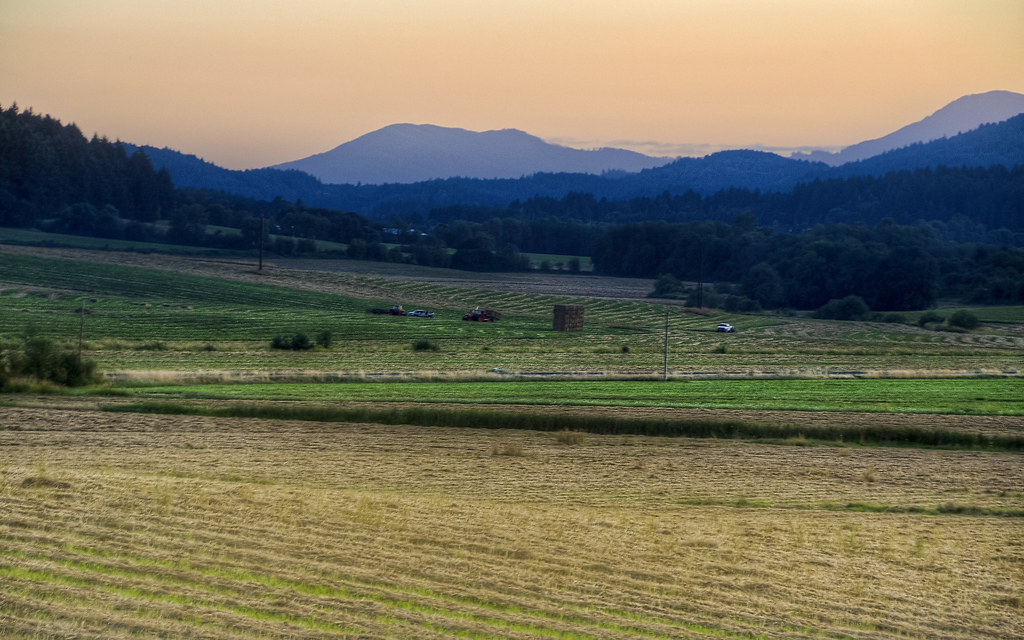 Grass Harvest: Oregon