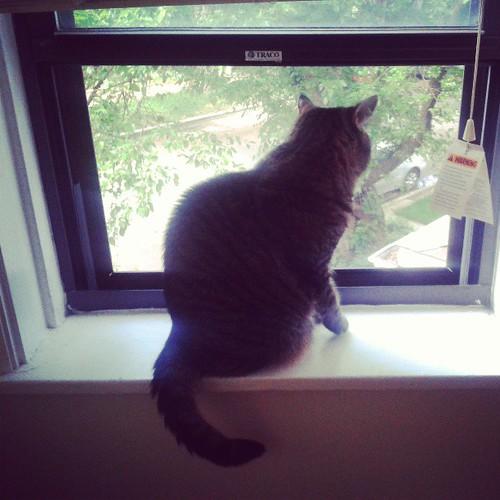 Has window, is happy
