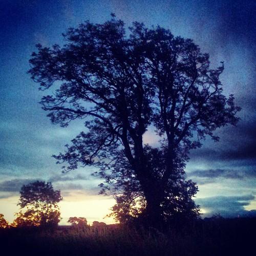 Dawn tree 3