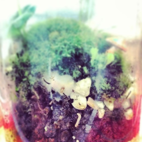 Ooh! Look at the worm in #terrarium no. 1 Limau Estate, sealed 22 weeks ago! It's alive!