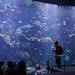 We enjoyed the aquarium, this was just one of the tanks.