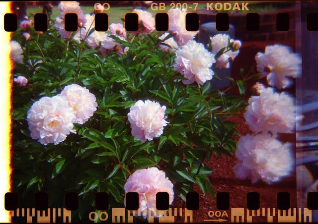 Lomo Flores