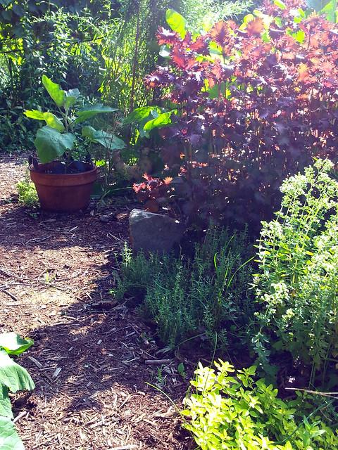 pottedeggplant