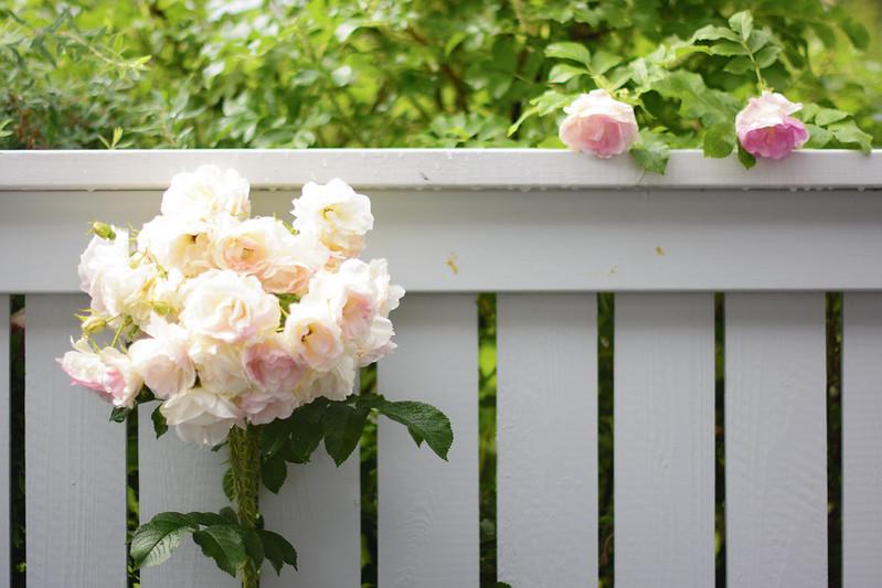 Al otro lado del jardín