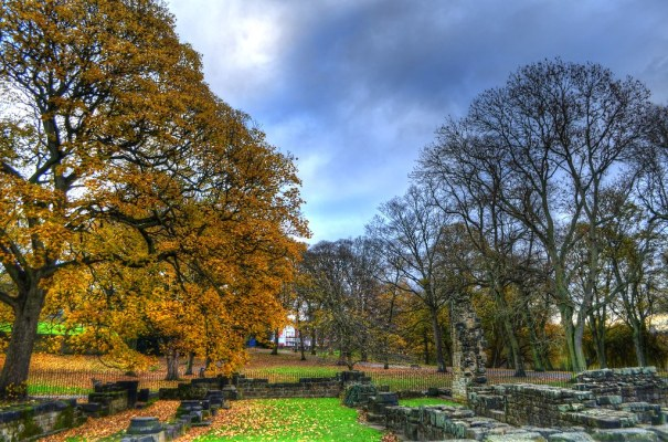 Kirkstall Abbey Trees