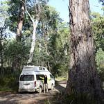 02 Viajefilos en Australia. Barrington NP 42