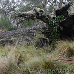02 Viajefilos en Australia. Barrington NP 28