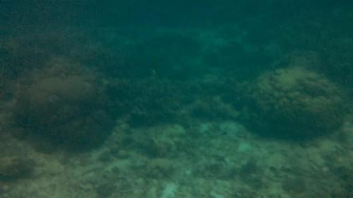 No me agoto de mirar el fondo coralino del mar