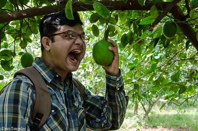 plucking fruit from tree