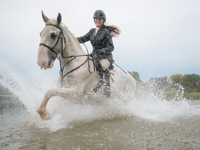 Clippity Clop Splishy Splashy - Horse Running Though Water