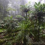 07 Viajefilos en Australia. Dorrigo Rainforest NP 39
