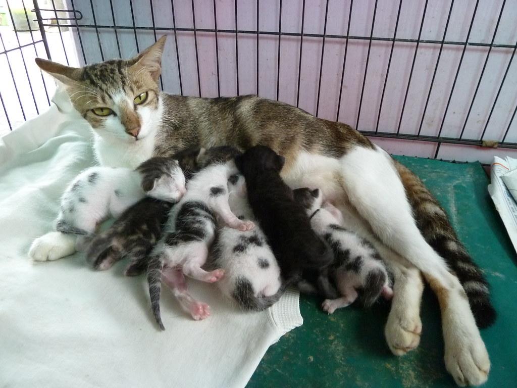 貓咪論壇 - [送養]板橋超溫馴母貓和7隻小貓(小貓全送出)
