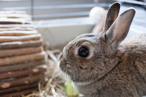 Bunny portait