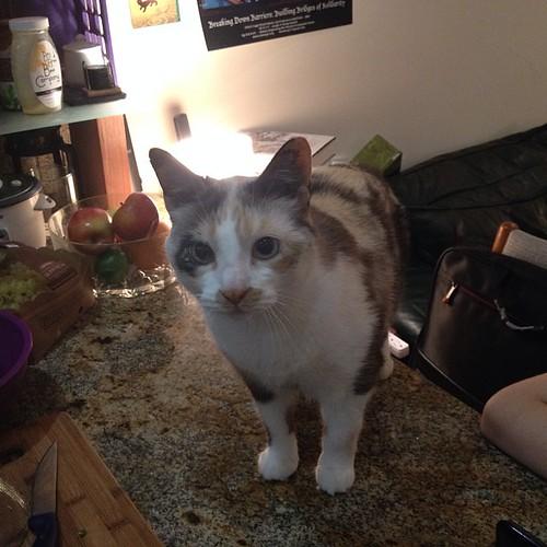 Dyson the curious cat