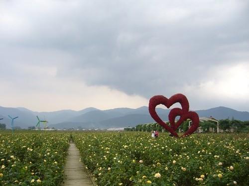宝趣玫瑰园