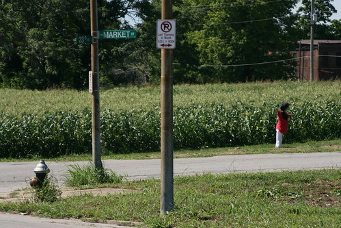 Cornfield at 23rd and N. Market