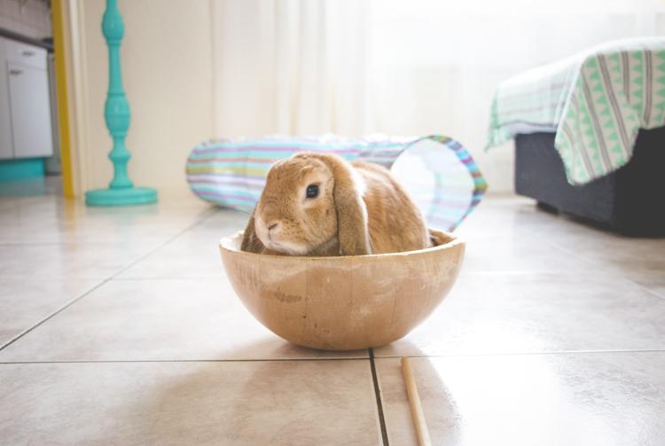 Bunny Snapshots | foreverpetite.net