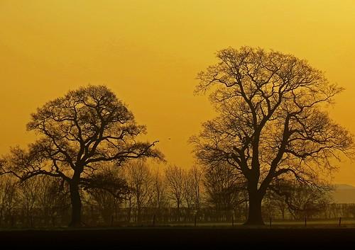 Golden Cardington Sunrise