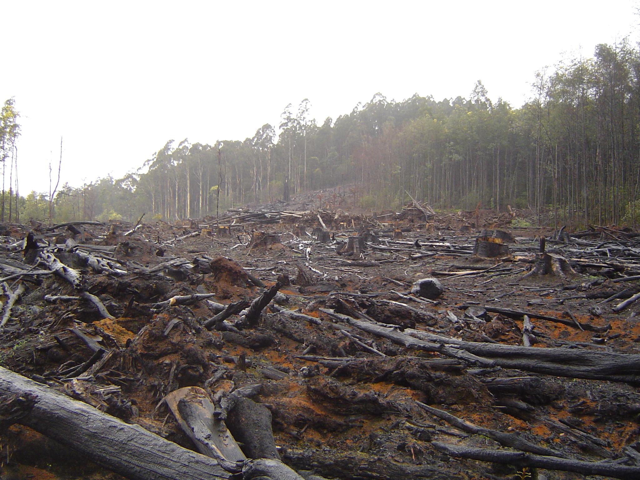 Deforestation Flickr