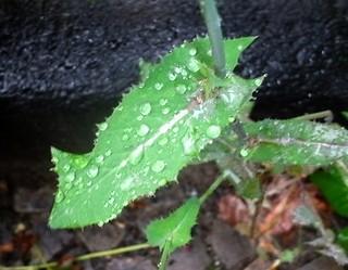 Regen auf Blatt