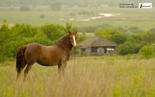 amazing horse hd wallpaper