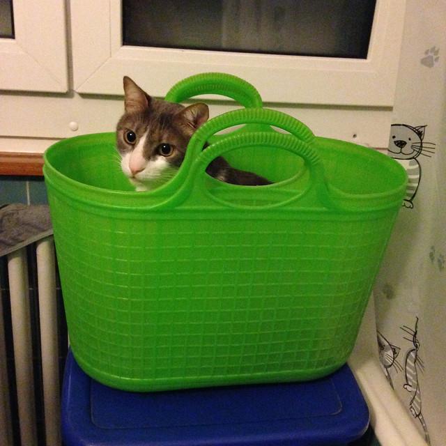 Cats (2013 11) -- Mon petit panier de légumes