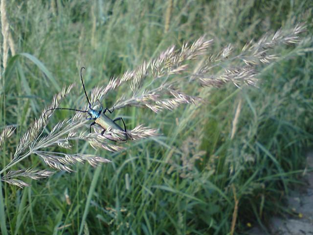 Жук // Beetle