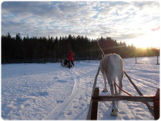 Rovaniemi (17)