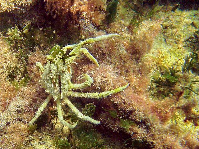 Camouflage Crab Cudjoe Key Flickr Photo Sharing