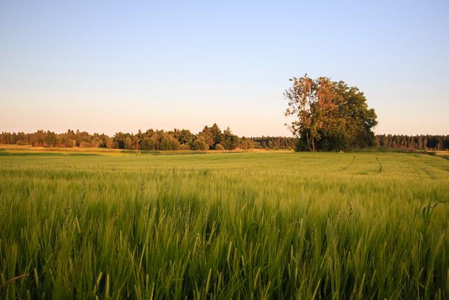 Swedish Landscape