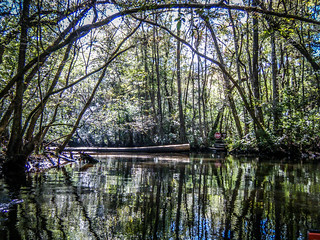 South Edisto River-041