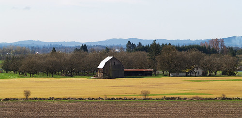 orchard and farm 2