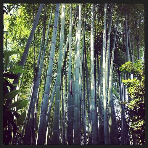 Bamboo #lago #maggiore #isola #madre