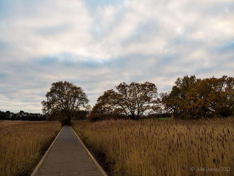 Boardwalk, Upton Country Park