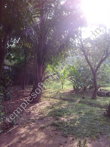 Nandhavanam. Velleeswarar Kovil. Mangadu