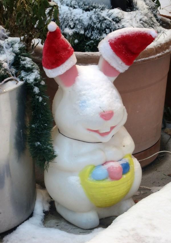 Bunny Claus
