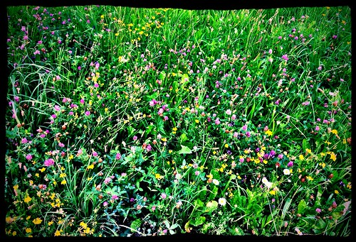 Summer meadow by SpatzMe