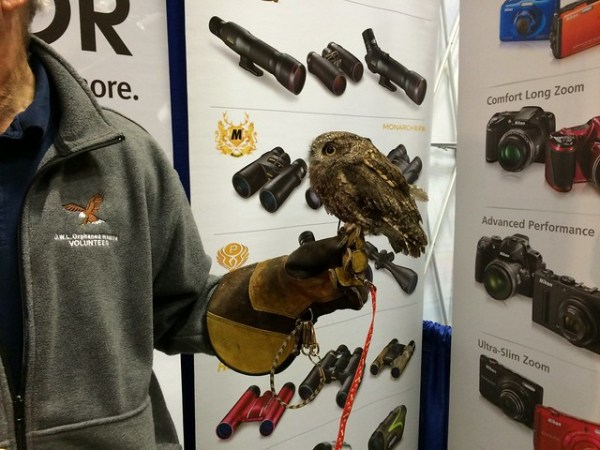 Rescued Screech Owl at the Nikon booth