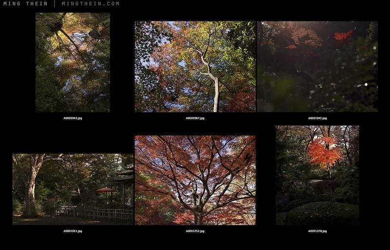mar14 autumn in tokyo contact sheet