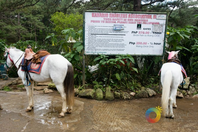 A Manor Christmas Horseback Riding - Our Awesome Planet-7.jpg