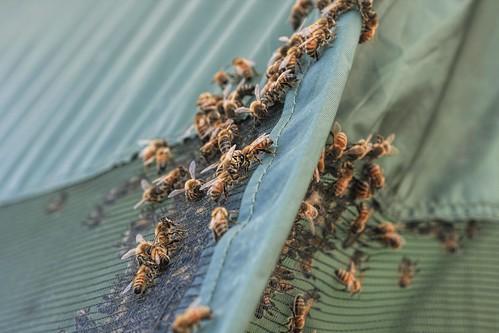 Lithopolis Honeyfest